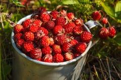 Φράουλες λιβαδιών σε ένα παλαιό φλυτζάνι αργιλίου στη χλόη Στοκ Εικόνα