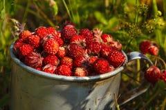 Φράουλες λιβαδιών σε ένα παλαιό φλυτζάνι αργιλίου στη χλόη Στοκ φωτογραφίες με δικαίωμα ελεύθερης χρήσης