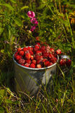 Φράουλες λιβαδιών σε ένα παλαιό φλυτζάνι αργιλίου στη χλόη Στοκ φωτογραφία με δικαίωμα ελεύθερης χρήσης