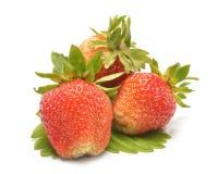 Φράουλες με τα φύλλα που απομονώνονται σε ένα άσπρο υπόβαθρο Στοκ εικόνα με δικαίωμα ελεύθερης χρήσης