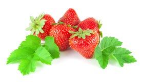 Φράουλες με τα φύλλα Στοκ Εικόνα
