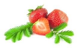 Φράουλες με τα φύλλα Στοκ Εικόνες
