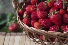 Φράουλες σε ένα καλάθι Στοκ Φωτογραφία