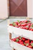 Φράουλες σε ένα κλουβί Στοκ Φωτογραφίες
