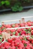 Φράουλες σε ένα κλουβί Στοκ φωτογραφία με δικαίωμα ελεύθερης χρήσης