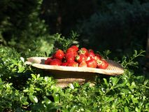 φράουλες σε ένα υπόβαθρο της βλάστησης Στοκ φωτογραφία με δικαίωμα ελεύθερης χρήσης