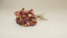 Φράουλες σε μια ακτίνα Στοκ Φωτογραφίες