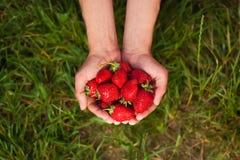Φράουλες στα αρσενικά χέρια Στοκ εικόνα με δικαίωμα ελεύθερης χρήσης