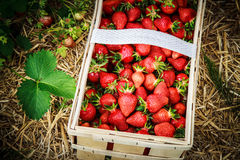 Φράουλες στο καλάθι Στοκ εικόνα με δικαίωμα ελεύθερης χρήσης