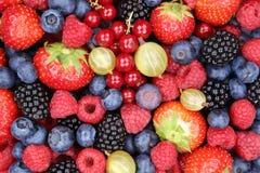 Φράουλες συλλογής μούρων φρούτων μούρων, βακκίνια raspbe στοκ εικόνα με δικαίωμα ελεύθερης χρήσης
