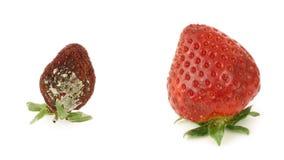 Φράουλες απόθεμα βίντεο