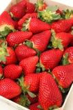 Φράουλες Gigant Στοκ Εικόνα