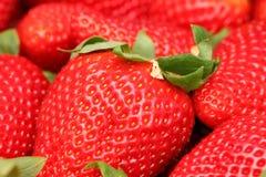 Φράουλες Gigant Στοκ φωτογραφία με δικαίωμα ελεύθερης χρήσης