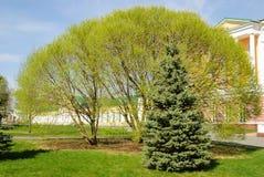 Φρέσκα δέντρα Στοκ Φωτογραφίες