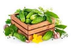 Φρέσκα αγγούρια στο ξύλινο κιβώτιο με το πράσινα φύλλο και το λουλούδι στοκ φωτογραφίες