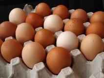 Φρέσκα αγροτικά αυγά Στοκ Φωτογραφία