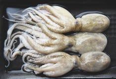 φρέσκα ακατέργαστα θαλασσινά καλαμαριών χταποδιών στο δίσκο το εστιατόριο στοκ φωτογραφίες με δικαίωμα ελεύθερης χρήσης