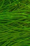 Φρέσκα ακατέργαστα πράσινα φασόλια Στοκ φωτογραφία με δικαίωμα ελεύθερης χρήσης
