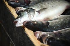 Φρέσκα ακατέργαστα ψάρια σκουμπριών στην αγορά Στοκ Φωτογραφίες