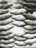Φρέσκα ακατέργαστα ψάρια στην αγορά Στοκ φωτογραφίες με δικαίωμα ελεύθερης χρήσης