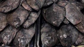 Φρέσκα ακατέργαστα ψάρια στους δίσκους για την πώληση στην αγορά θαλασσινών φιλμ μικρού μήκους