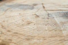 Φρέσκα αποβαλλόμενα δέντρα περικοπών με τα δαχτυλίδια αύξησης, σύσταση, σημάδια Στοκ Εικόνες