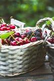 Φρέσκα δασικά φρούτα στο ξύλο Στοκ φωτογραφία με δικαίωμα ελεύθερης χρήσης