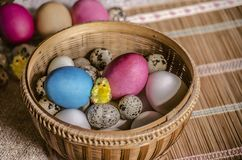 Φρέσκα αυγά κοτόπουλου και αυγά ορτυκιών με τα χρωματισμένα αυγά Πάσχας και ένα κίτρινο κοτόπουλο παιχνιδιών σε ένα καλάθι αχύρου Στοκ Εικόνες