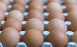 Φρέσκα αυγά κοτόπουλου στα κλουβιά, κίτρινα αυγά κοτόπουλου Στοκ Φωτογραφία