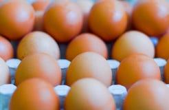 Φρέσκα αυγά κοτόπουλου στα κλουβιά, κίτρινα αυγά κοτόπουλου Στοκ εικόνα με δικαίωμα ελεύθερης χρήσης