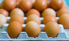 Φρέσκα αυγά κοτόπουλου στα κλουβιά, κίτρινα αυγά κοτόπουλου Στοκ φωτογραφία με δικαίωμα ελεύθερης χρήσης
