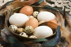 Φρέσκα αυγά παπιών, κοτών και ορτυκιών Στοκ φωτογραφίες με δικαίωμα ελεύθερης χρήσης