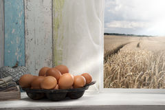 Φρέσκα αυγά στη στρωματοειδή φλέβα παραθύρων, τομέας σιταριού στο υπόβαθρο Στοκ Φωτογραφία