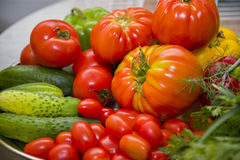 φρέσκα λαχανικά κήπων Στοκ εικόνα με δικαίωμα ελεύθερης χρήσης