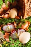 φρέσκα λαχανικά χορταριών Στοκ Εικόνες