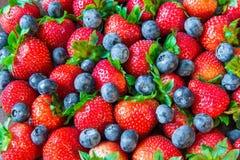 Φρέσκα βακκίνια φραουλών Στοκ Εικόνες