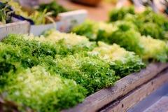 Φρέσκα βιο φύλλα σαλάτας στην αγορά αγροτών στο Στρασβούργο, Γαλλία Στοκ Εικόνες