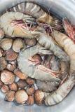 Φρέσκα γαρίδες και cockle Στοκ εικόνες με δικαίωμα ελεύθερης χρήσης