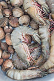 Φρέσκα γαρίδες και cockle στοκ εικόνα