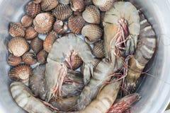 Φρέσκα γαρίδες και cockle στοκ φωτογραφία