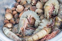 Φρέσκα γαρίδες και cockle στοκ φωτογραφίες