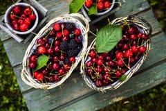 Φρέσκα δασικά φρούτα στο ξύλο στοκ εικόνες