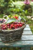 Φρέσκα δασικά φρούτα στο ξύλο Στοκ Φωτογραφία