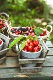 Φρέσκα δασικά φρούτα στο ξύλο Στοκ Φωτογραφίες
