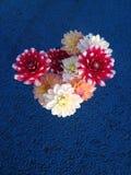 Φρέσκα επιλεγμένα ζωηρόχρωμα λουλούδια Στοκ Φωτογραφίες