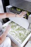 φρέσκα ζυμαρικά βιομηχανίας Στοκ φωτογραφία με δικαίωμα ελεύθερης χρήσης