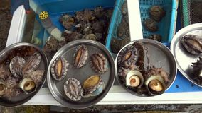 Φρέσκα ζωντανά οστρακόδερμα στο κύπελλο που καλύπτεται με το νερό στην αγορά για την πώληση απόθεμα βίντεο