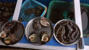 Φρέσκα ζωντανά οστρακόδερμα στο κύπελλο που καλύπτεται με το νερό στην αγορά για την πώληση φιλμ μικρού μήκους