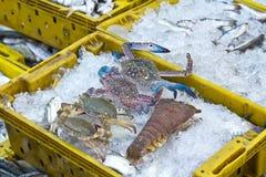 φρέσκα θαλασσινά Στοκ Εικόνα