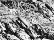 φρέσκα θαλασσινά ψαριών Στοκ Εικόνες